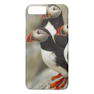 Coque iPhone 8 Plus/7 Plus Les macareux atlantiques sur Machias scellent