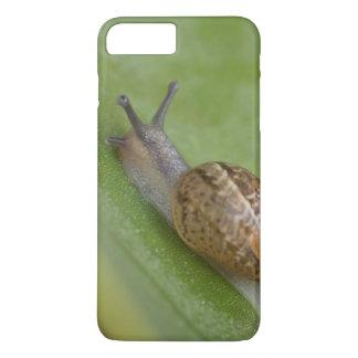 Coque iPhone 8 Plus/7 Plus L'escargot de Brown sur la rosée a couvert la