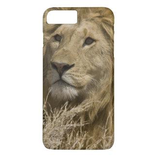 Coque iPhone 8 Plus/7 Plus Lion africain, Panthera Lion, portrait d'a