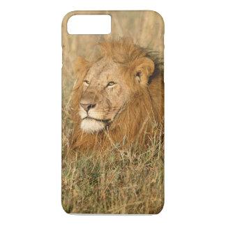 Coque iPhone 8 Plus/7 Plus Lion de mâle adulte à la première lumière