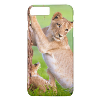 Coque iPhone 8 Plus/7 Plus Lions africains Kgalagadi