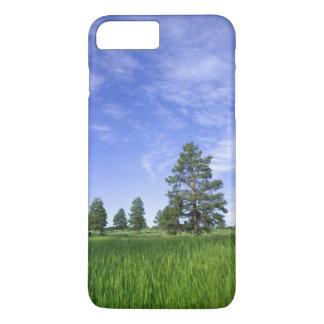 Coque iPhone 8 Plus/7 Plus L'UTAH. LES Etats-Unis. Pins de Ponderosa Pinus
