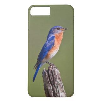 Coque iPhone 8 Plus/7 Plus Mâle adulte oriental 2 d'oiseau bleu (Sialis de