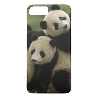 Coque iPhone 8 Plus/7 Plus Melanoleuca d'Ailuropoda de bébés de panda géant)