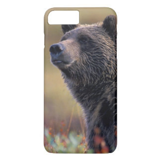 Coque iPhone 8 Plus/7 Plus Na, Etats-Unis, Alaska, Denali NP, ours gris