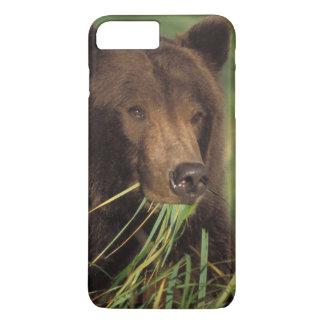 Coque iPhone 8 Plus/7 Plus ours brun, arctos d'Ursus, ours gris, Ursus 7