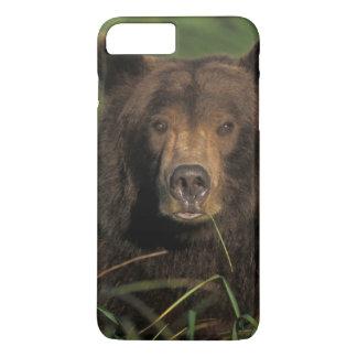 Coque iPhone 8 Plus/7 Plus ours brun, arctos d'Ursus, ours gris, Ursus 9