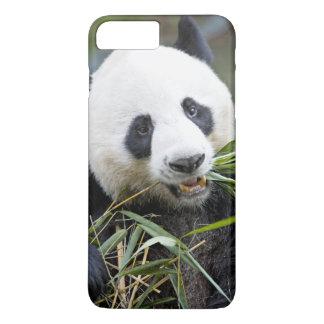 Coque iPhone 8 Plus/7 Plus Panda mangeant des pousses de bambou Alluropoda 2