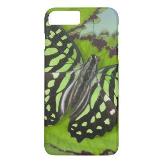 Coque iPhone 8 Plus/7 Plus Photographie de Sammamish Washington de papillon