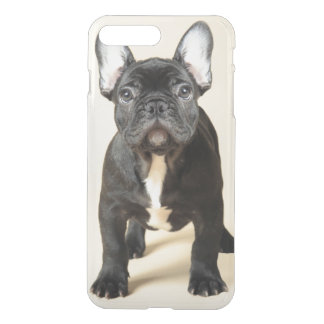 Coque iPhone 8 Plus/7 Plus Portrait de studio de la position de chiot de