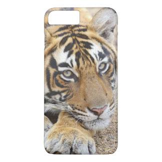 Coque iPhone 8 Plus/7 Plus Portrait de tigre de Bengale royal, Ranthambhor 4