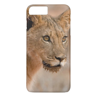 Coque iPhone 8 Plus/7 Plus Portrait d'un jeune lion masculin (Panthera Lion)