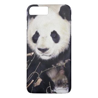 Coque iPhone 8 Plus/7 Plus Province de l'Asie, Chine, Sichuan. Panda géant