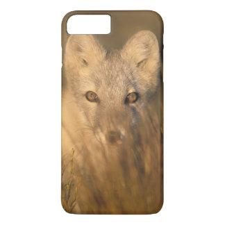 Coque iPhone 8 Plus/7 Plus renard arctique, lagopus d'Alopex, sur les 1002 2