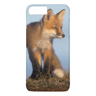 Coque iPhone 8 Plus/7 Plus renard rouge, vulpes de Vulpes, dans les 1002