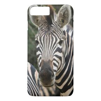 Coque iPhone 8 Plus/7 Plus Support du zèbre de trois Burchell (Equus