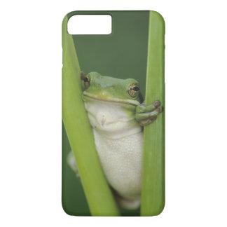 Coque iPhone 8 Plus/7 Plus Treefrog vert, Hyla cinerea, adulte, lac