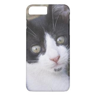 Coque iPhone 8 Plus/7 Plus Un chaton noir et blanc de chat dans le jardin