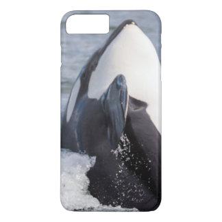 Coque iPhone 8 Plus/7 Plus Violation de baleine d'orque
