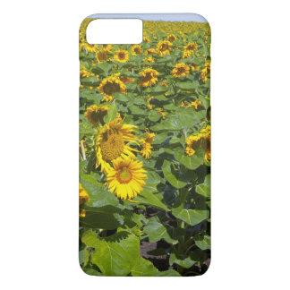 Coque iPhone 8 Plus/7 Plus WA, le comté de Kittitas, gisement de tournesol