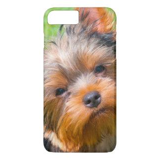 Coque iPhone 8 Plus/7 Plus Yorkshire Terrier recherchant
