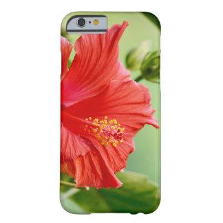Coque iphone de fleur de ketmie