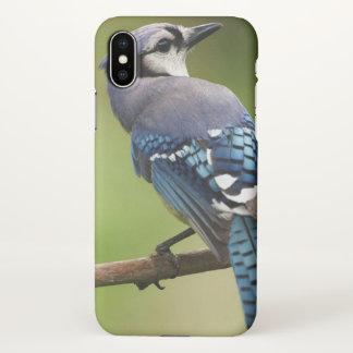 Coque iPhone X Geai bleu