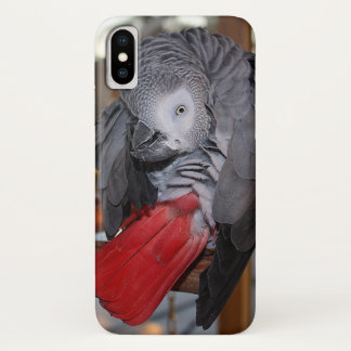 Coque iPhone X Perroquet flexible de gris africain du Congo avec
