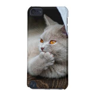 Coque iPod Touch 5G Chat britannique - chat drôle - chat gris
