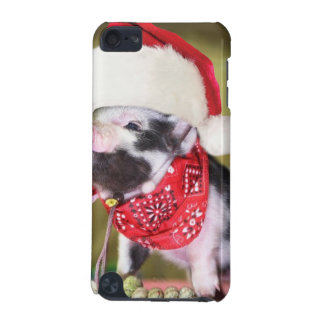 Coque iPod Touch 5G Porc le père noël - porc de Noël - porcelet