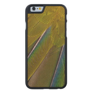 Coque Mince En Érable iPhone 6 Conception de plume de Jenday Conure