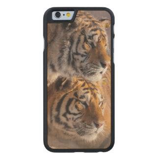 Coque Mince En Érable iPhone 6 Deux tigres sibériens ensemble, la Chine