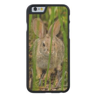 Coque Mince En Érable iPhone 6 Lapin de lapin de désert