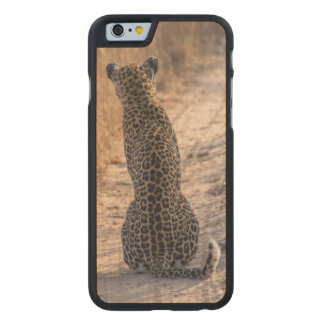 Coque Mince En Érable iPhone 6 Léopard se reposant dans la route, Afrique