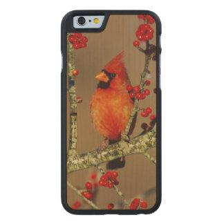 Coque Mince En Érable iPhone 6 Mâle cardinal du nord été perché, IL
