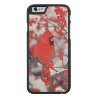 Coque Mince En Érable iPhone 6 Mâle cardinal du nord, hiver, IL