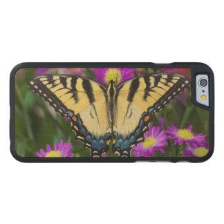 Coque Mince En Érable iPhone 6 Papillon de machaon sur la marguerite