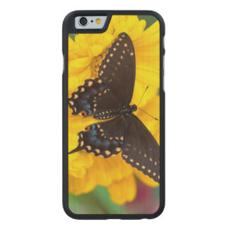 Coque Mince En Érable iPhone 6 Papillon noir de machaon