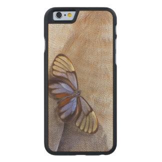 Coque Mince En Érable iPhone 6 plume égyptienne d'oie de papillon de Verre-aile