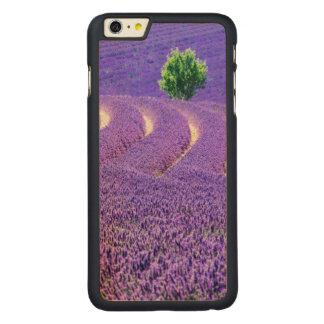 Coque Mince En Érable iPhone 6 Plus Arbre solitaire dans le domaine de lavande, France
