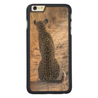 Coque Mince En Érable iPhone 6 Plus Léopard se reposant dans la route, Afrique