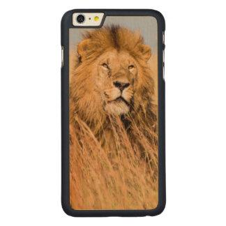 Coque Mince En Érable iPhone 6 Plus Lion masculin caché dans l'herbe
