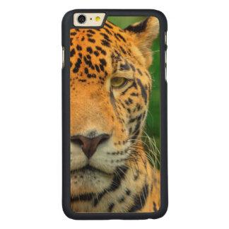 Coque Mince En Érable iPhone 6 Plus Plan rapproché d'un visage de jaguar, Belize