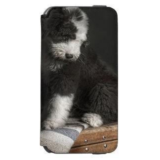 Coque-portefeuille iPhone 6 Incipio Watson™ Portrait de chiot de queue écourtée dans le studio