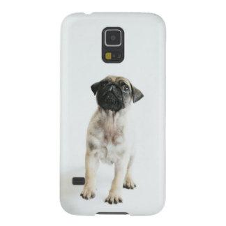 Coque Pour Samsung Galaxy S5 Chiot mignon de carlin