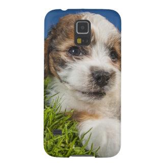 Coque Pour Samsung Galaxy S5 Chiot mignon (Shitzu)