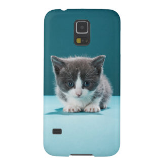 Coque Pour Samsung Galaxy S5 Petit chaton