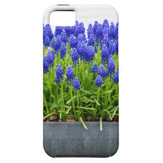 Coque Tough iPhone 5 Boîte grise de fleur en métal avec les jacinthes