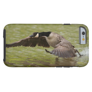 Coque Tough iPhone 6 Atterrissage d'oie du Canada dans l'eau