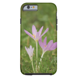 Coque Tough iPhone 6 Fleur de crocus